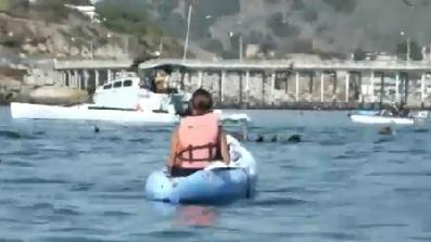Humpback Whale Surprises Kayakers