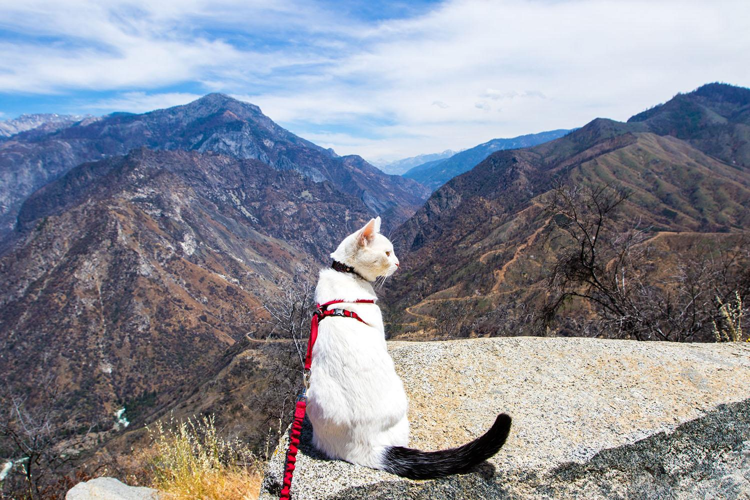 <p>Kings Canyon National Park overlook. Kings Canyon National Park is adjacent to Sequoia National Park in California's Sierra Nevada mountains. (Photo: Our Vie / Caters News) </p>