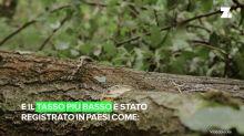 La tragica situazione delle foreste in Europa