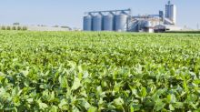 Organic Soybean Prices Could Top $23 per Bushel as Panic Buying Accelerates
