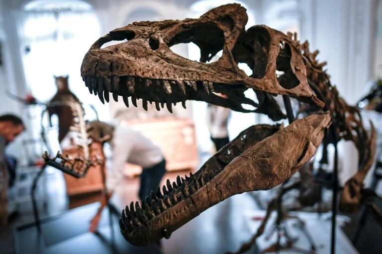 66 million years ago an asteroid roughly twice the diameter of Paris crashed into Earth, wiping out all land-dwelling dinosaurs and 75 percent of life on the planet (AFP Photo/STEPHANE DE SAKUTIN)