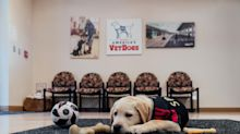 Atlanta United partners with nonprofit to train the MLS' first service dog, Spike