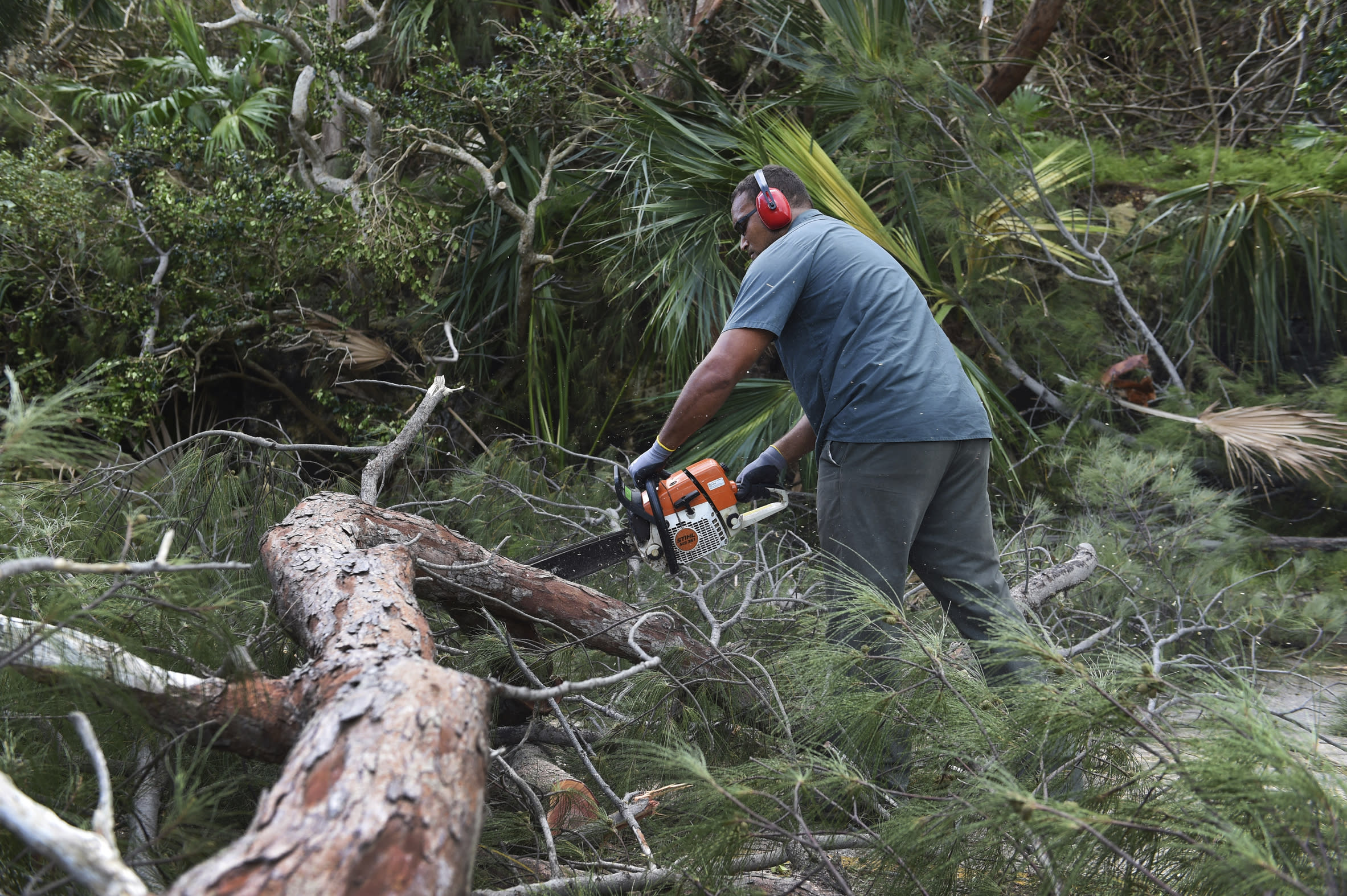 A man uses a powered saw to cut away a felled tree blocking Harrington Sound Road in the aftermath of Hurricane Humberto, in the Smiths parish of Bermuda, Thursday, Sept. 19, 2019. Humberto blew off rooftops, toppled trees and knocked out power but officials said Thursday that the Category 3 storm caused no reported deaths. (AP Photo/Akil J. Simmons)