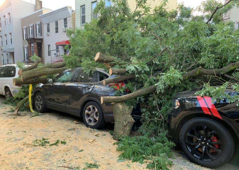 Cars are buried under the remains of a fallen tree in the Greenpoint area of Brooklyn New York on August 4, 2020 (AFP Photo/Diane DESOBEAU)