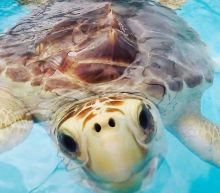 How This Hospital Keeps Sick Turtles Safe During Hurricane Season
