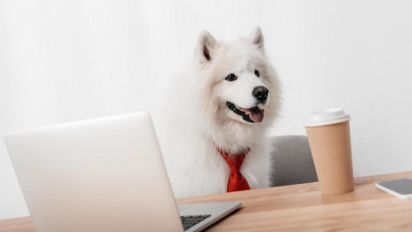 Take Your Dog to Work Day 2018: When is it and why did it start