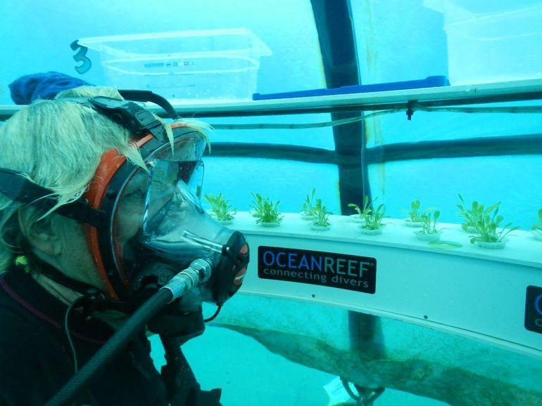 """<p>The underwater farm, dubbed """"Nemo's Garden,"""" has been lauded as a remarkably clever solution for Italy's lack of arable land (with potential wider use for other countries with the same problem). Since the plants–currently all the ubiquitous Italian herb, basil–are settled just a few feet below the ocean surface, sunlight can still filter in, the temperature is kept at a stable 77°F by the sea, and the seedlings are far away from any parasites. (Credit: <a href=""""http://www.nemosgarden.com/"""" rel=""""nofollow noopener"""" target=""""_blank"""" data-ylk=""""slk:Nemo's Garden"""" class=""""link rapid-noclick-resp"""">Nemo's Garden</a>)</p>"""