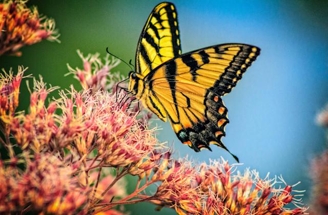 Insects could be extinct within a century, scientists say