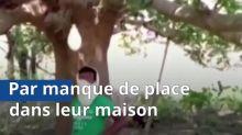 VIDEO. Coronavirus: Des indiens contraints de choisir les arbres pour se confiner
