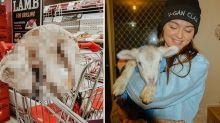 Vegan's horrific stunt in aisle of Coles supermarket