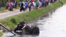 Villagers use makeshift rope ladder to rescue trapped elephant from canal in Sri Lanka