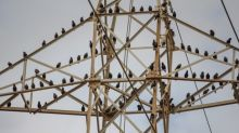 Investors Flock to Utilities amid Trade War Tensions