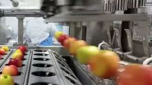 Automatic slicer cuts apples into perfect wedges instantly
