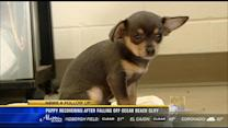 Puppy recovering after falling off Ocean Beach cliff