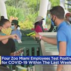 Four Zoo Miami Employees Have COVID-19