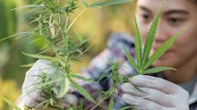 Tilray Is Still Trying to Be a Growth Stock. Is It a Brilliant Strategy or a Misguided Move?