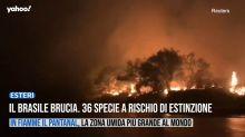 Il Brasile brucia. 36 specie a rischio di estinzione