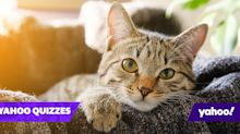 Feline clever? Only cat experts will get full marks on this quiz