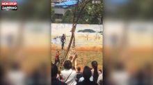 Chine : Une girafe se retrouve le cou bloqué dans un arbre (Vidéo)