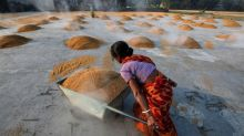 Asia Rice-India prices retreat from highs, Vietnam sees fresh offers