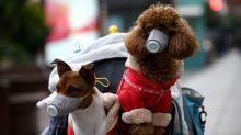 Hong Kong Pet dog that tested for coronavirus dies after returning from quarantine virus-free