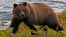 U.S. proposes end of grizzly-baiting ban in Alaska's national preserves