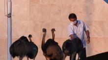 Jair Bolsonaro bitten by giant bird at his palace during coronavirus quarantine