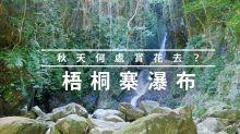 梧桐寨的瀑布與植物