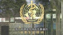 台灣防疫強到WHO也必須承認!陳柏惟曝關鍵一點