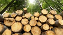 5 Top Dividend Stocks in the Forestry Industry