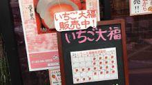 【日本廣島倉敷8日遊】酒都西条。百年老字號和菓子店 ♥ 士多啤梨大福