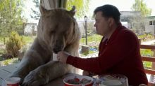 This Is Crazy: Pet Bear Eats With Russian Couple at Breakfast Table