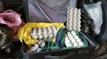 Man fined $5,000 for smuggling 'balut' eggs into Singapore