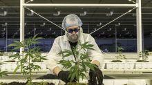 Adivina cuál es la nueva materia prima que vuelve loco a Wall Street: el cannabis