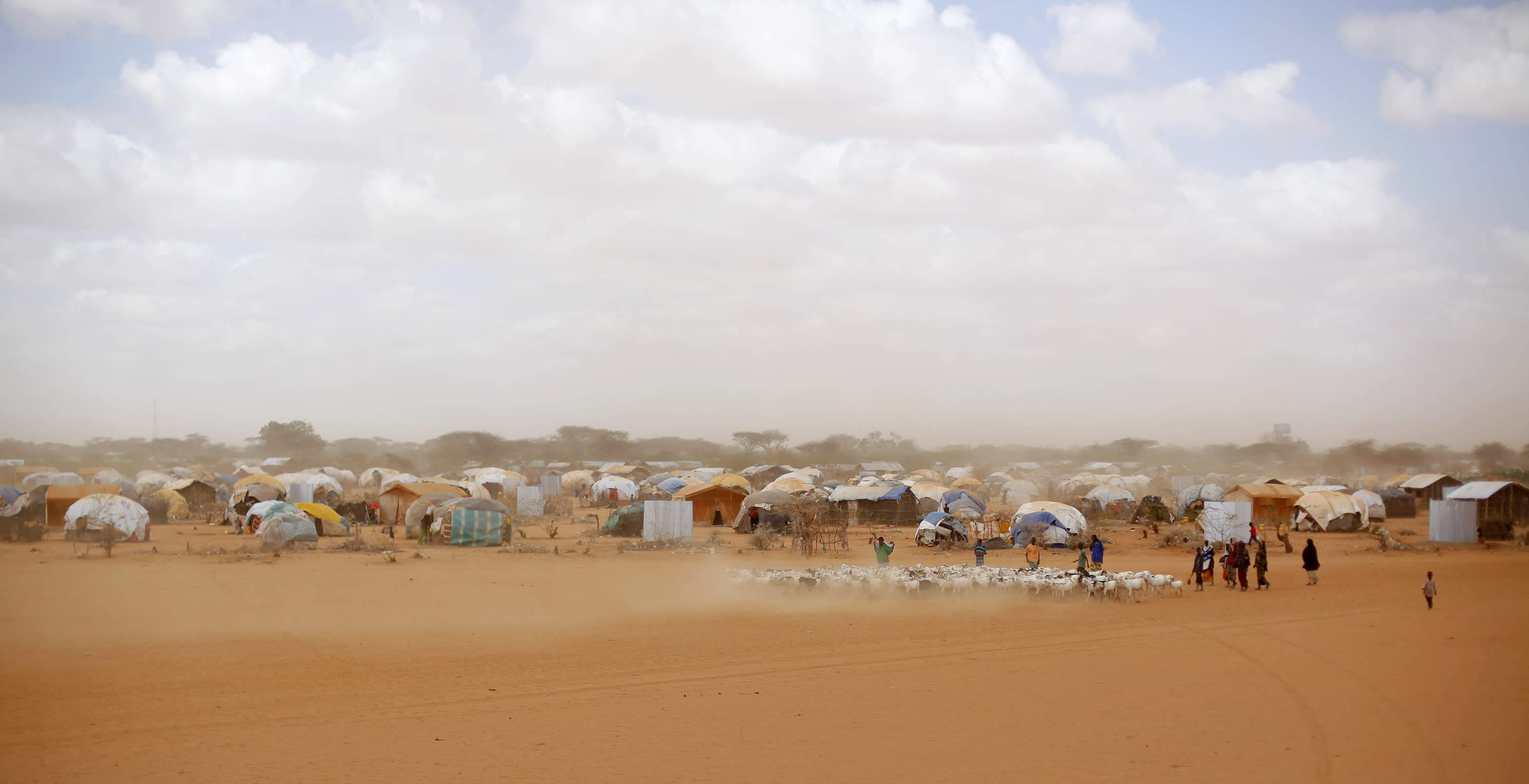 FILE - In this Aug. 7, 2011 file photo, Somali refugees herd their goats at the Ifo refugee camp outside Dadaab, eastern Kenya, 100 kilometers (62 miles) from the Somali border. Human-induced climate change contributed to low rain levels in East Africa in 2011, making global warming one of the causes of Somalia's famine and the tens of thousands of deaths that followed, a new study has found. (AP Photo/Jerome Delay, File)