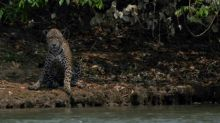 Ambientalistas y empresas brasileñas piden frenar la deforestación amazónica