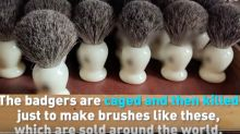 P&G to stop selling badger shave brushes, citing 'terrible practices'