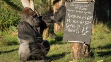 Attenborough launches appeal for virus-hit London Zoo