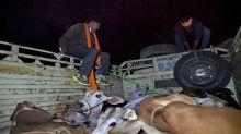 Gujarat: Gau Rakshaks Strike Back, Attack Two Cattle Traders in Ahmedabad