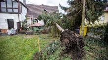 Von Sturmschäden betroffen? Diese Versicherungen greifen nach Orkantief Sabine