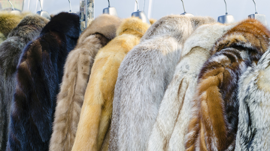 Animal rights activists hail Macy's new fur-free policy