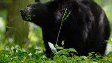 Bear encounter in North Carolina woman's yard sends her to the hospital, officials say