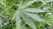 Money flows in 17 popular marijuana stocks show fewer 'short squeezes'