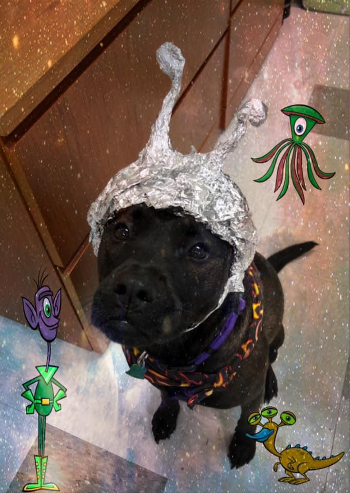 'Storm our shelter': Oklahoma animal shelter uses Area 51 craze to its advantage