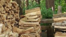 ¡Un reto casi imposible! ¿Puedes encontrar al gato camuflado entre los troncos?