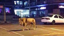 De leões nas ruas a água sanitária: entenda as fake news da COVID-19