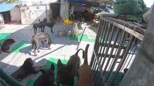 張媽媽動物之家面臨強制搬遷 500隻毛孩恐無家可歸