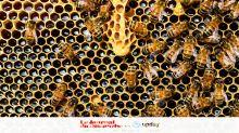 Comment le miel est-il fabriqué?