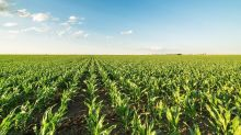 Corn Bounces After Breaking Down Through Support Wheat and Soybeans Follow