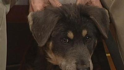 Noon Pet Of The Week: Grizzly